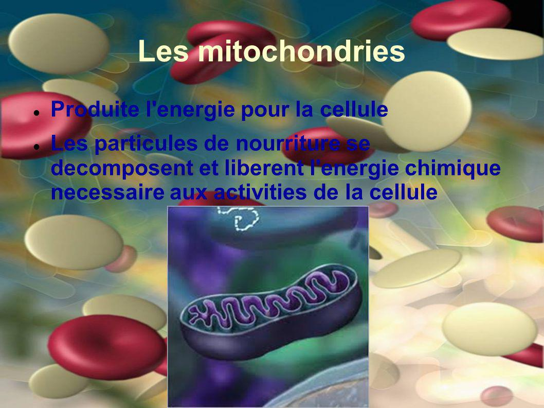Les mitochondries Produite l energie pour la cellule