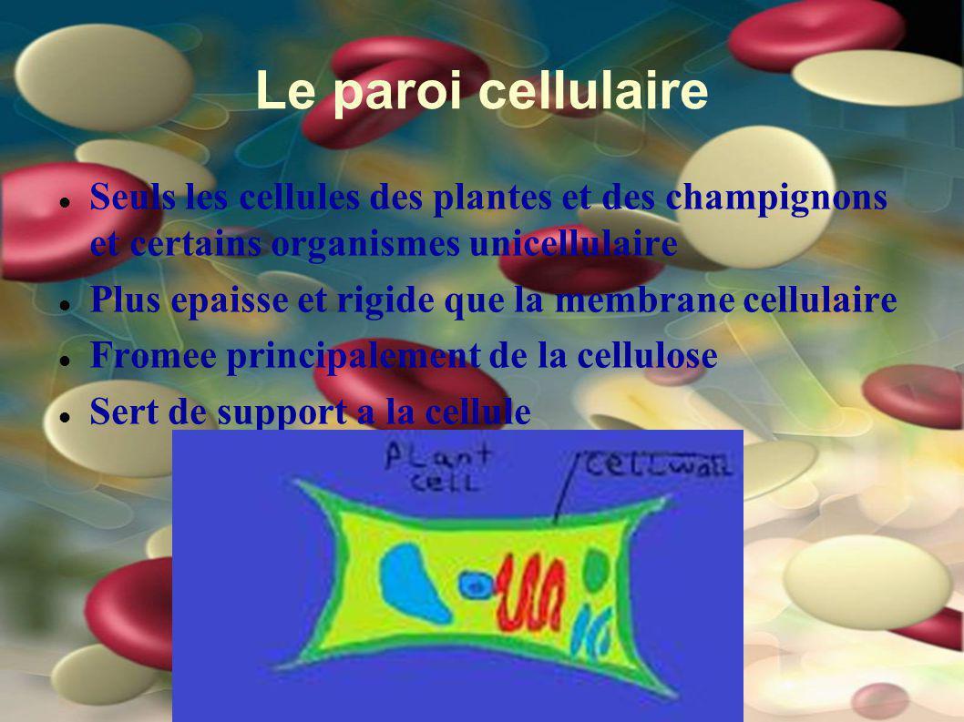 Le paroi cellulaire Seuls les cellules des plantes et des champignons et certains organismes unicellulaire.
