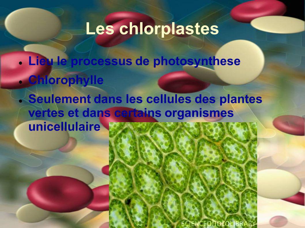 Les chlorplastes Lieu le processus de photosynthese Chlorophylle