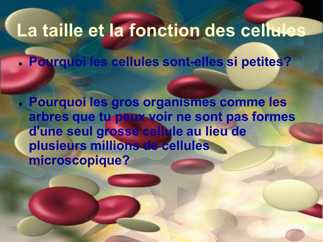 La taille et la fonction des cellules