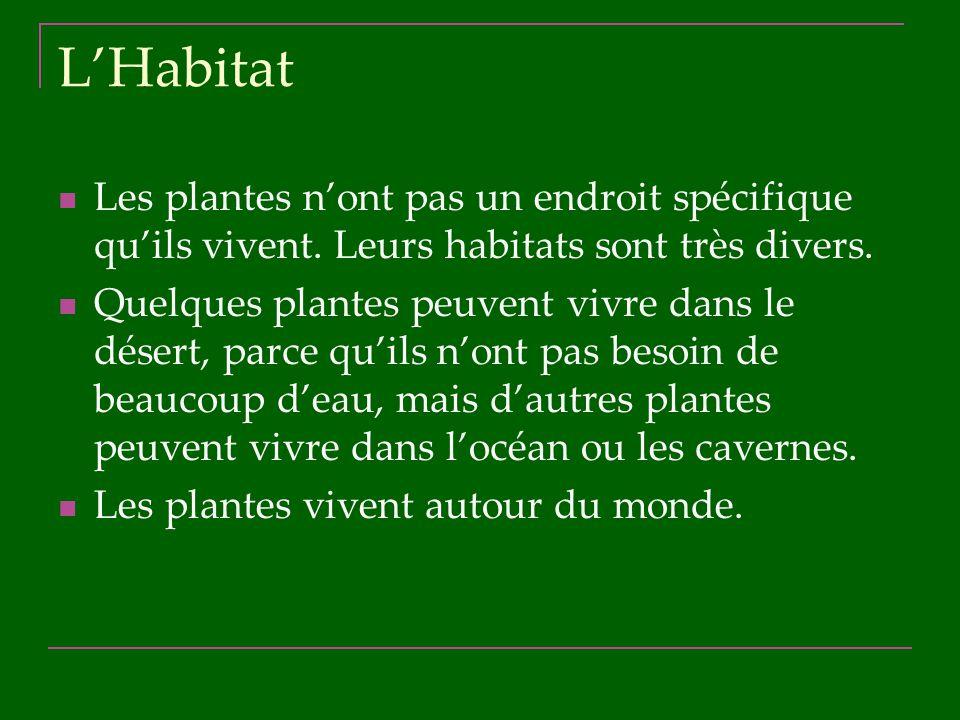 L'Habitat Les plantes n'ont pas un endroit spécifique qu'ils vivent. Leurs habitats sont très divers.