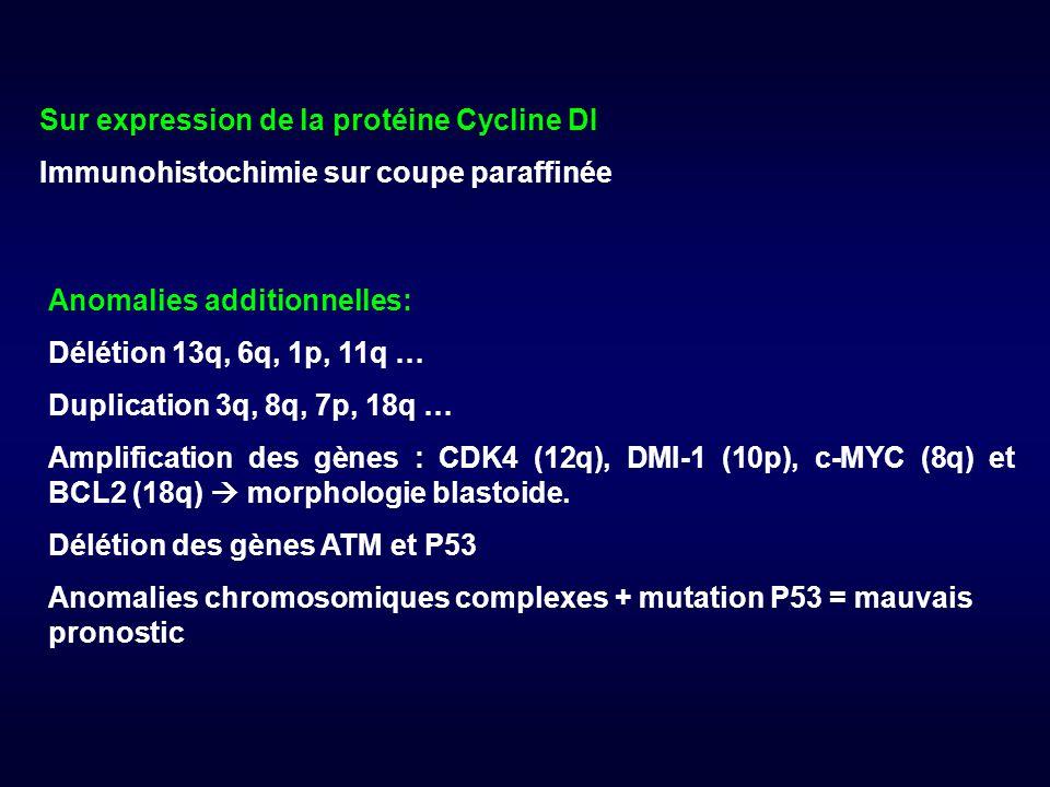 Sur expression de la protéine Cycline DI