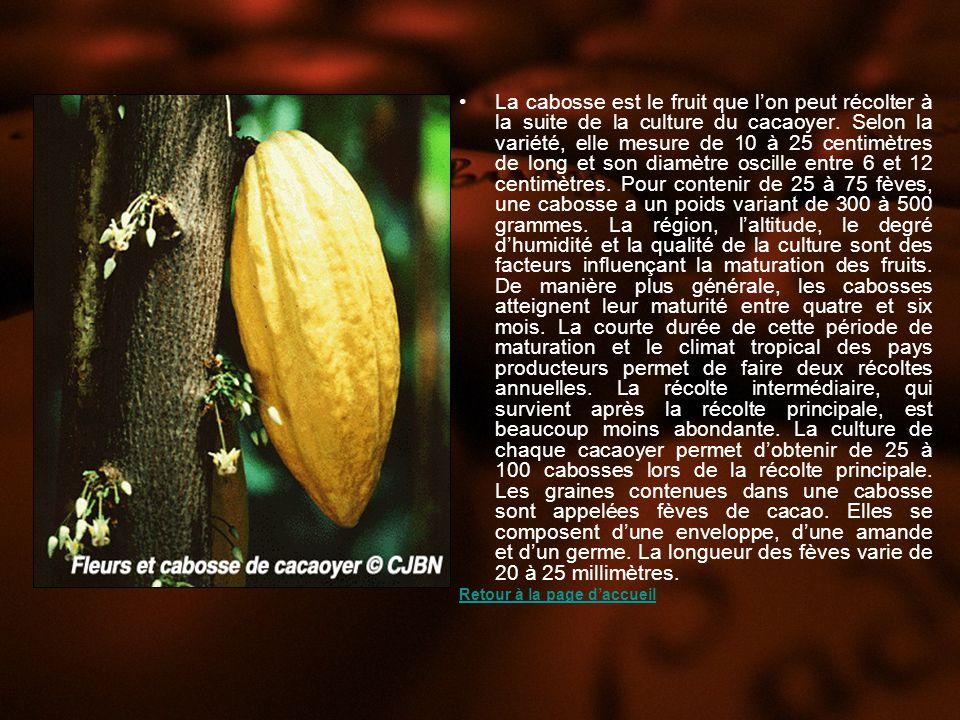 La cabosse est le fruit que l'on peut récolter à la suite de la culture du cacaoyer. Selon la variété, elle mesure de 10 à 25 centimètres de long et son diamètre oscille entre 6 et 12 centimètres. Pour contenir de 25 à 75 fèves, une cabosse a un poids variant de 300 à 500 grammes. La région, l'altitude, le degré d'humidité et la qualité de la culture sont des facteurs influençant la maturation des fruits. De manière plus générale, les cabosses atteignent leur maturité entre quatre et six mois. La courte durée de cette période de maturation et le climat tropical des pays producteurs permet de faire deux récoltes annuelles. La récolte intermédiaire, qui survient après la récolte principale, est beaucoup moins abondante. La culture de chaque cacaoyer permet d'obtenir de 25 à 100 cabosses lors de la récolte principale. Les graines contenues dans une cabosse sont appelées fèves de cacao. Elles se composent d'une enveloppe, d'une amande et d'un germe. La longueur des fèves varie de 20 à 25 millimètres.