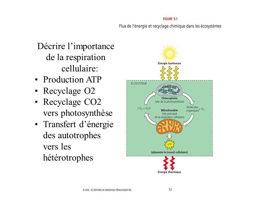 de la respiration cellulaire: