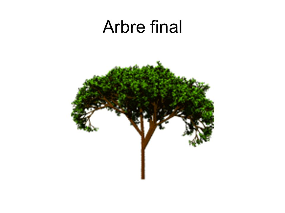 Arbre final