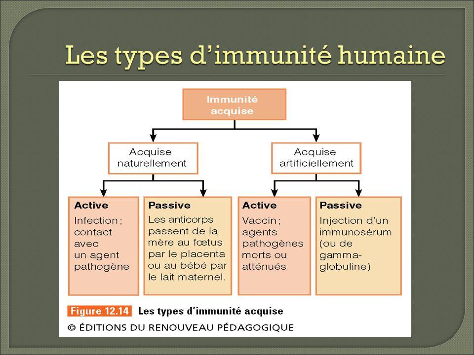 Les types d'immunité humaine