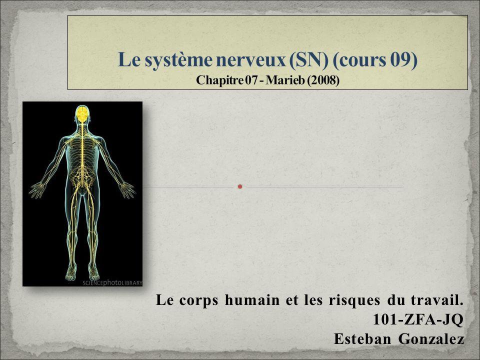 Le système nerveux (SN) (cours 09) Chapitre 07 - Marieb (2008)