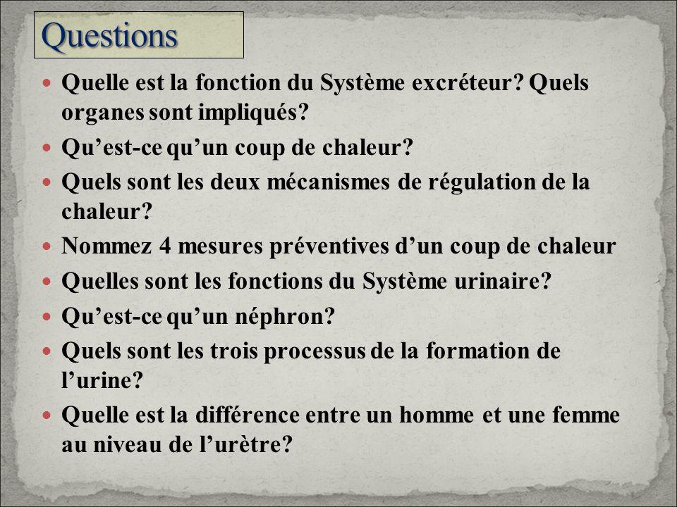 Questions Quelle est la fonction du Système excréteur Quels organes sont impliqués Qu'est-ce qu'un coup de chaleur