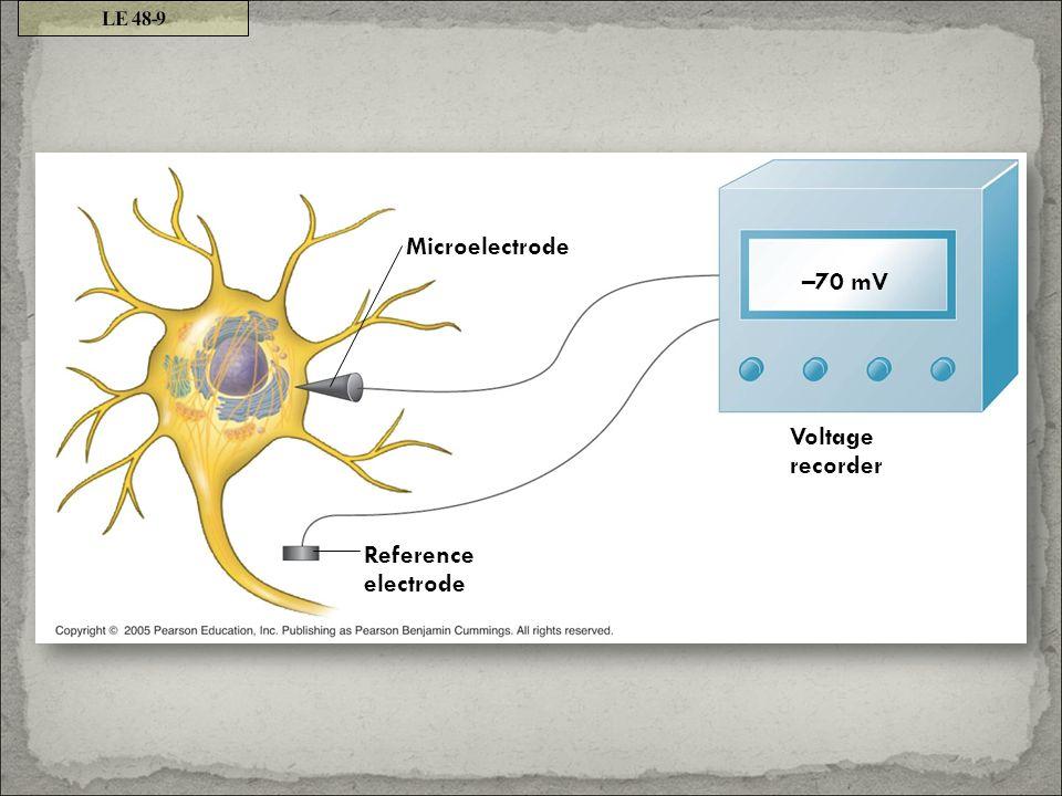 LE 48-9 Microelectrode –70 mV Voltage recorder Reference electrode