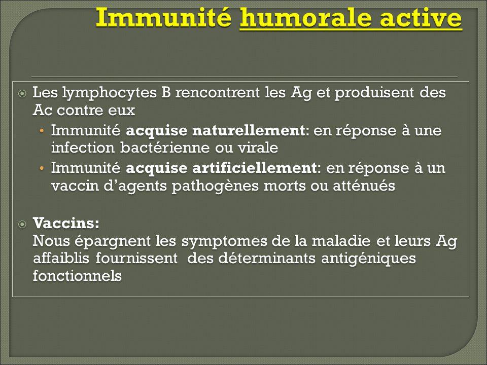 Immunité humorale active