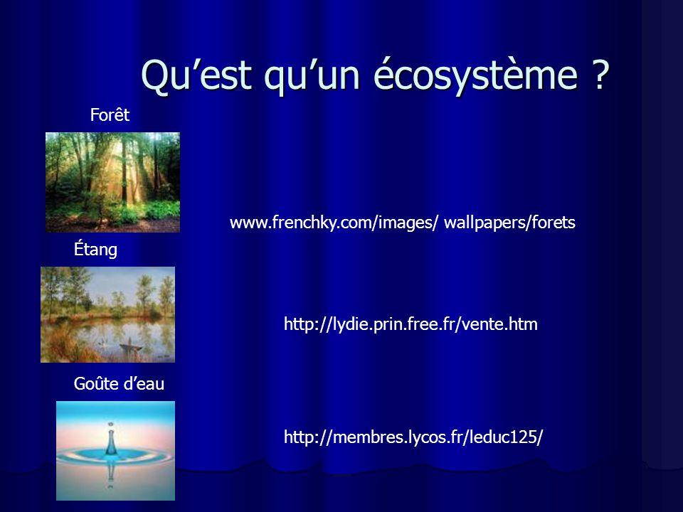 Qu'est qu'un écosystème