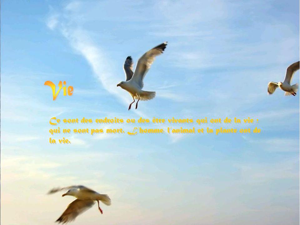 Vie Ce sont des endroits ou des être vivants qui ont de la vie ; qui ne sont pas mort.