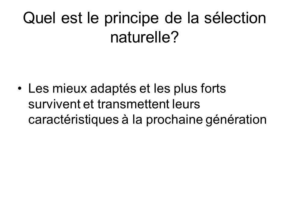 Quel est le principe de la sélection naturelle