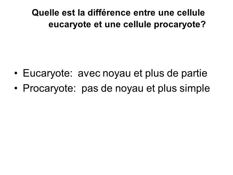 Quelle est la différence entre une cellule eucaryote et une cellule procaryote