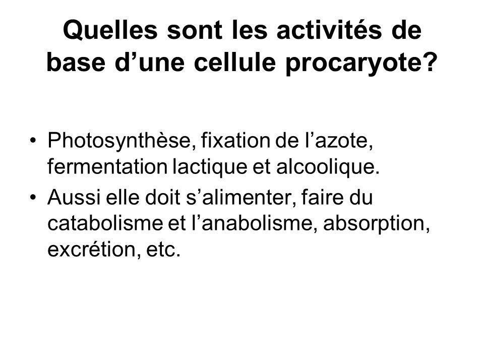 Quelles sont les activités de base d'une cellule procaryote