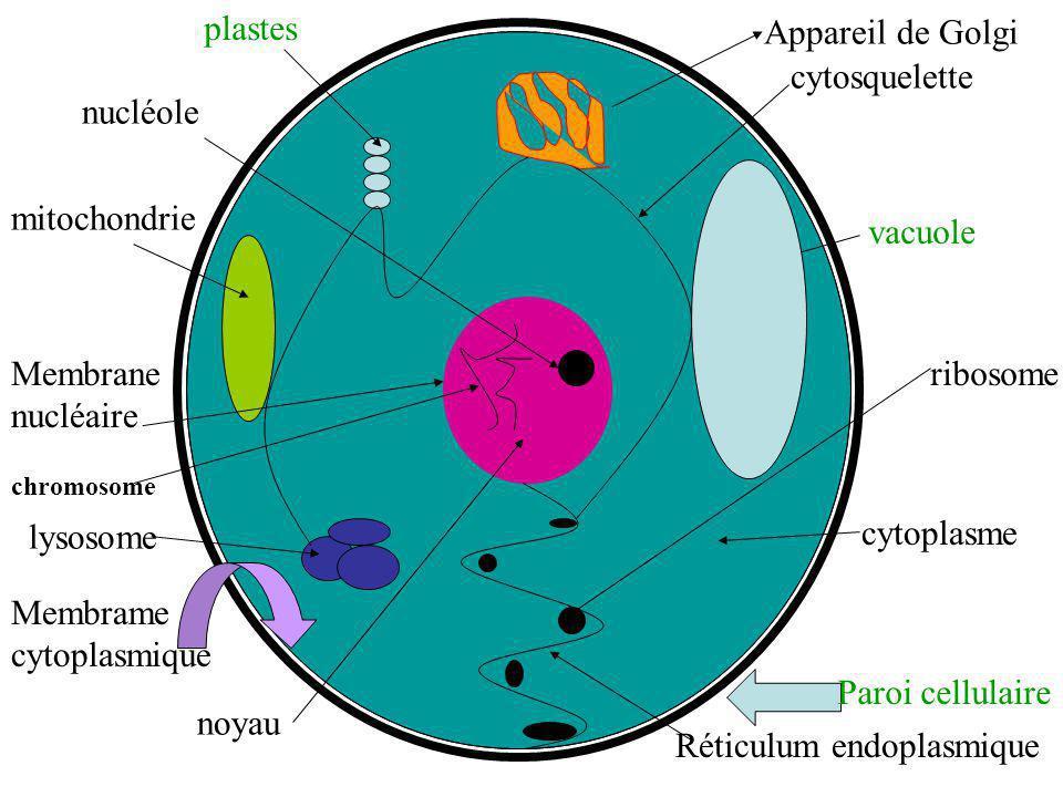 Réticulum endoplasmique