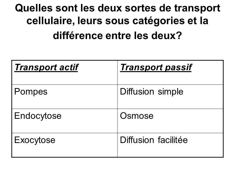 Quelles sont les deux sortes de transport cellulaire, leurs sous catégories et la différence entre les deux