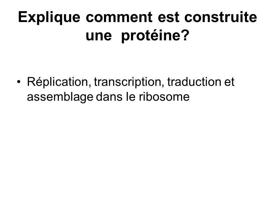 Explique comment est construite une protéine