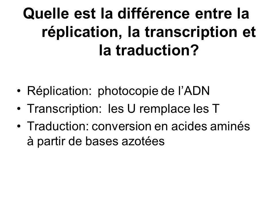 Quelle est la différence entre la réplication, la transcription et la traduction