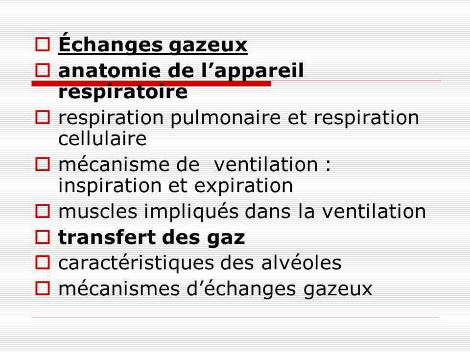 Échanges gazeux anatomie de l'appareil respiratoire. respiration pulmonaire et respiration cellulaire.