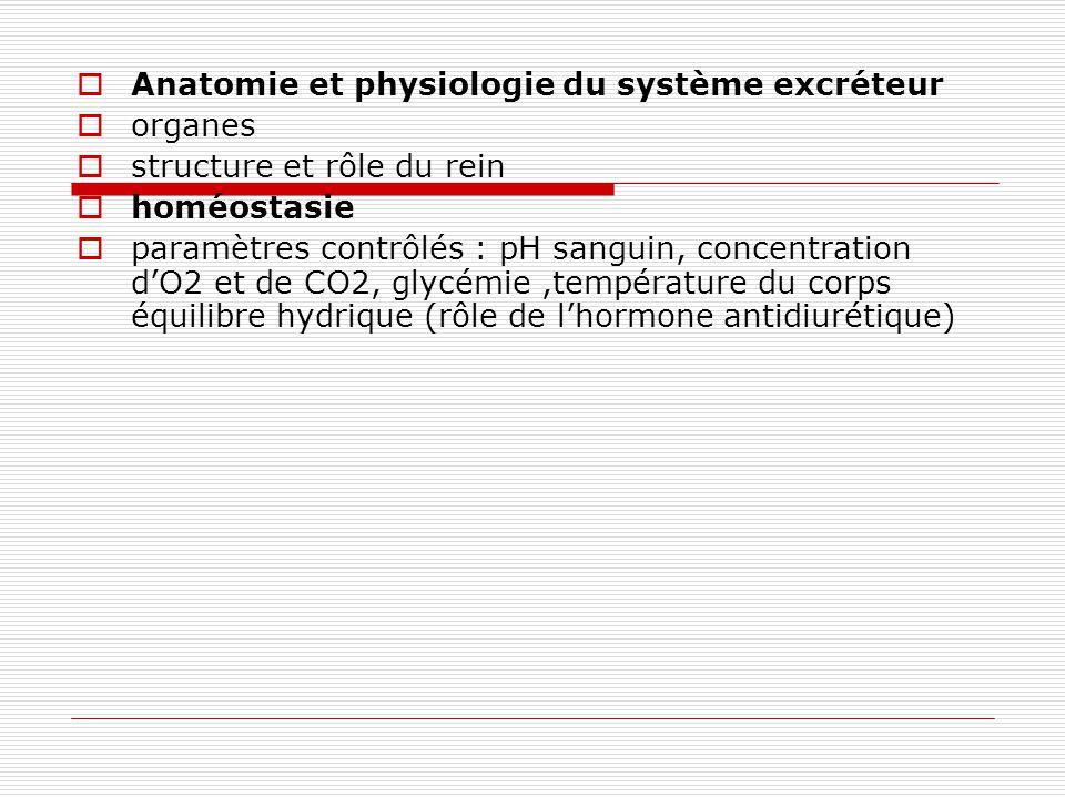 Anatomie et physiologie du système excréteur