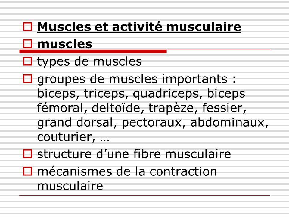 Muscles et activité musculaire