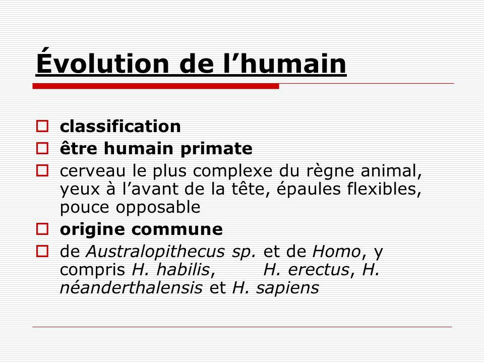 Évolution de l'humain classification être humain primate