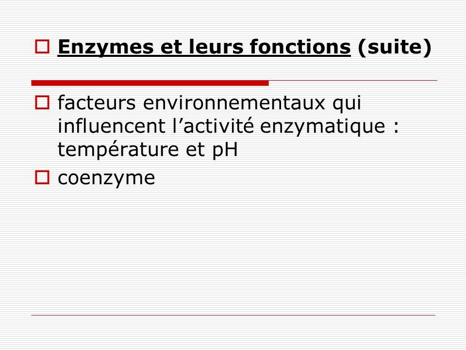 Enzymes et leurs fonctions (suite)