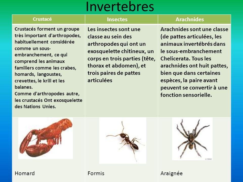 Invertebres Insectes Arachnides