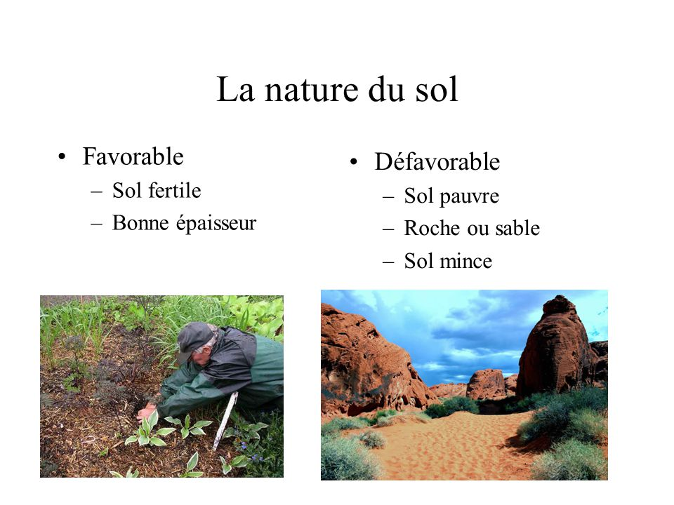 La nature du sol Favorable Défavorable Sol fertile Sol pauvre