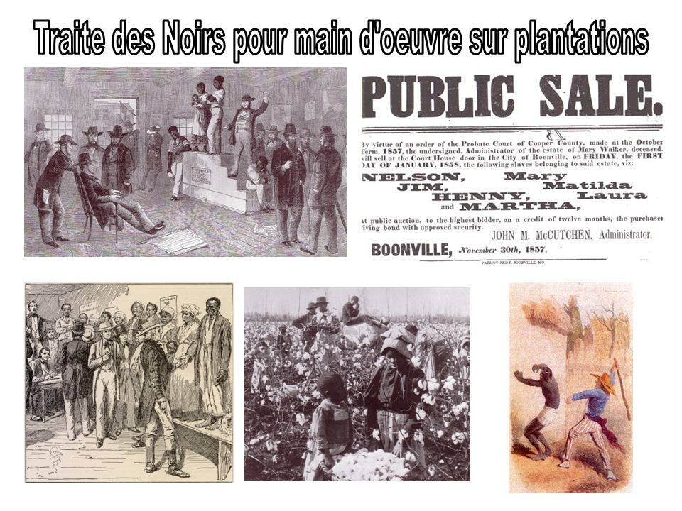 Traite des Noirs pour main d oeuvre sur plantations