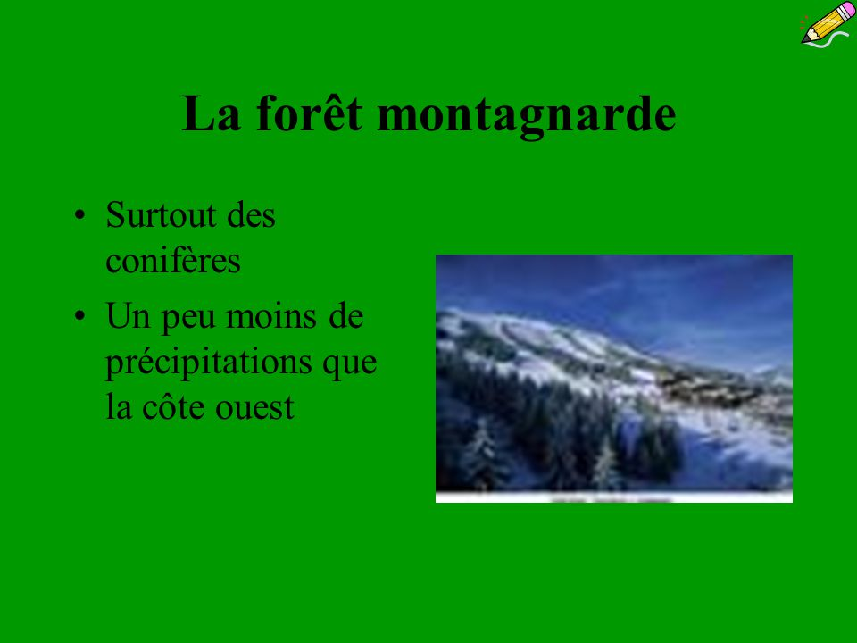 La forêt montagnarde Surtout des conifères