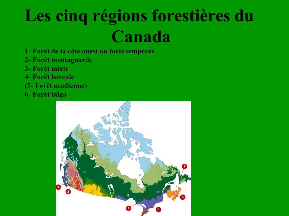 Les cinq régions forestières du
