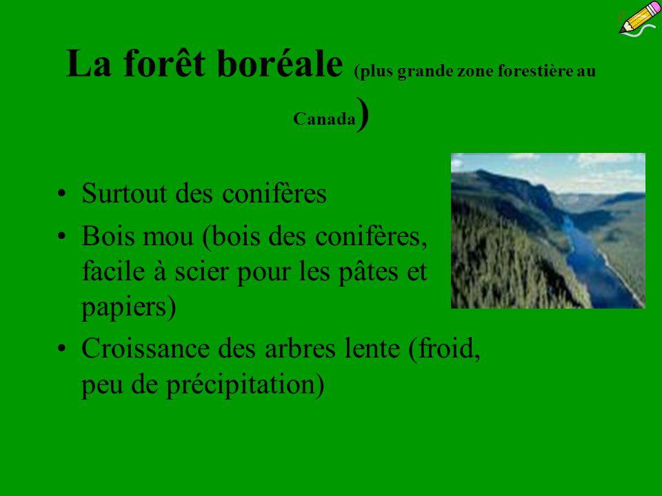 La forêt boréale (plus grande zone forestière au Canada)