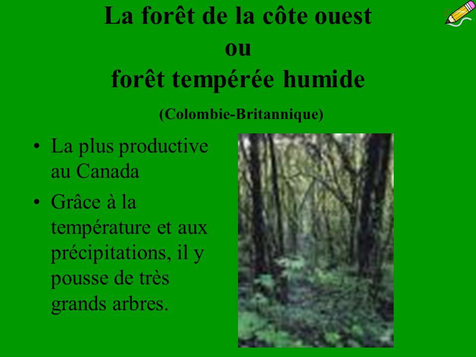 La forêt de la côte ouest ou forêt tempérée humide (Colombie-Britannique)