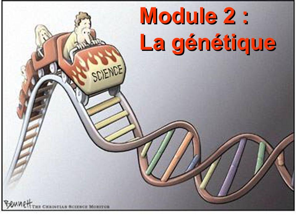 Module 2 : La génétique