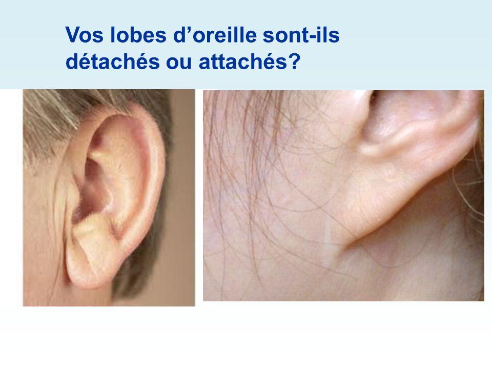 Vos lobes d'oreille sont-ils détachés ou attachés