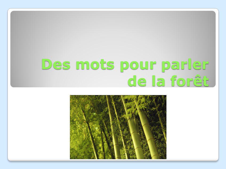 Des mots pour parler de la forêt