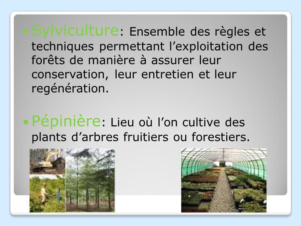 Sylviculture: Ensemble des règles et techniques permettant l'exploitation des forêts de manière à assurer leur conservation, leur entretien et leur regénération.