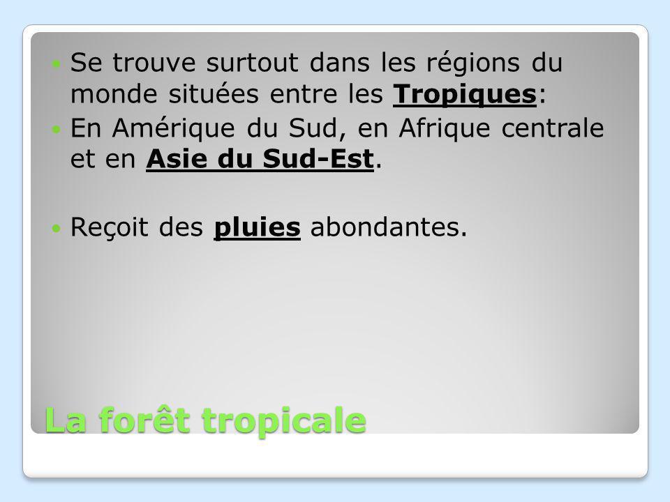 Se trouve surtout dans les régions du monde situées entre les Tropiques: