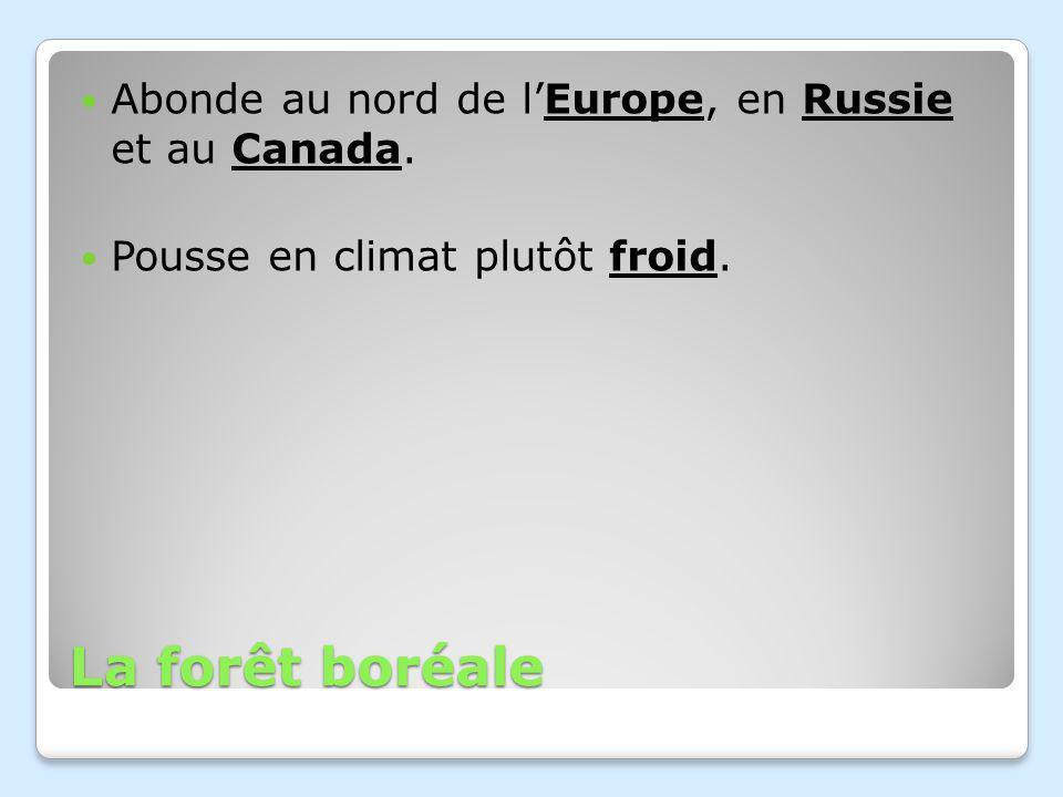 La forêt boréale Abonde au nord de l'Europe, en Russie et au Canada.