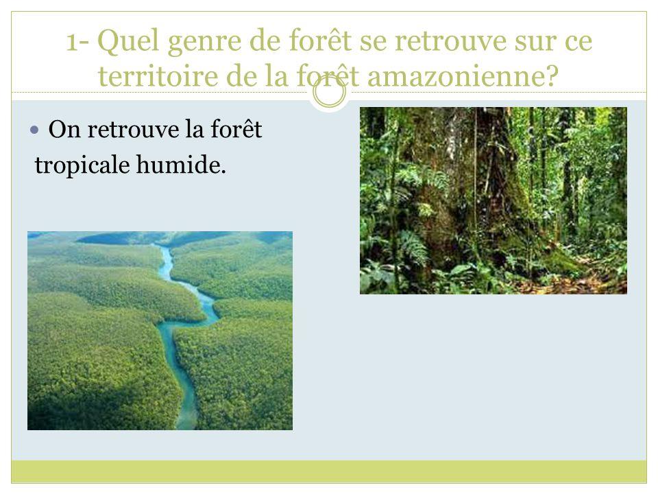 1- Quel genre de forêt se retrouve sur ce territoire de la forêt amazonienne