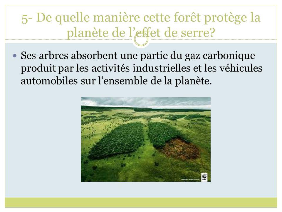 5- De quelle manière cette forêt protège la planète de l'effet de serre