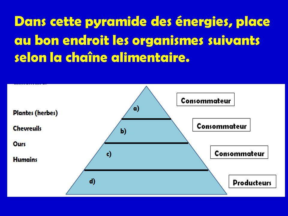 Dans cette pyramide des énergies, place au bon endroit les organismes suivants selon la chaîne alimentaire.