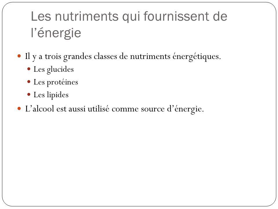 Les nutriments qui fournissent de l'énergie