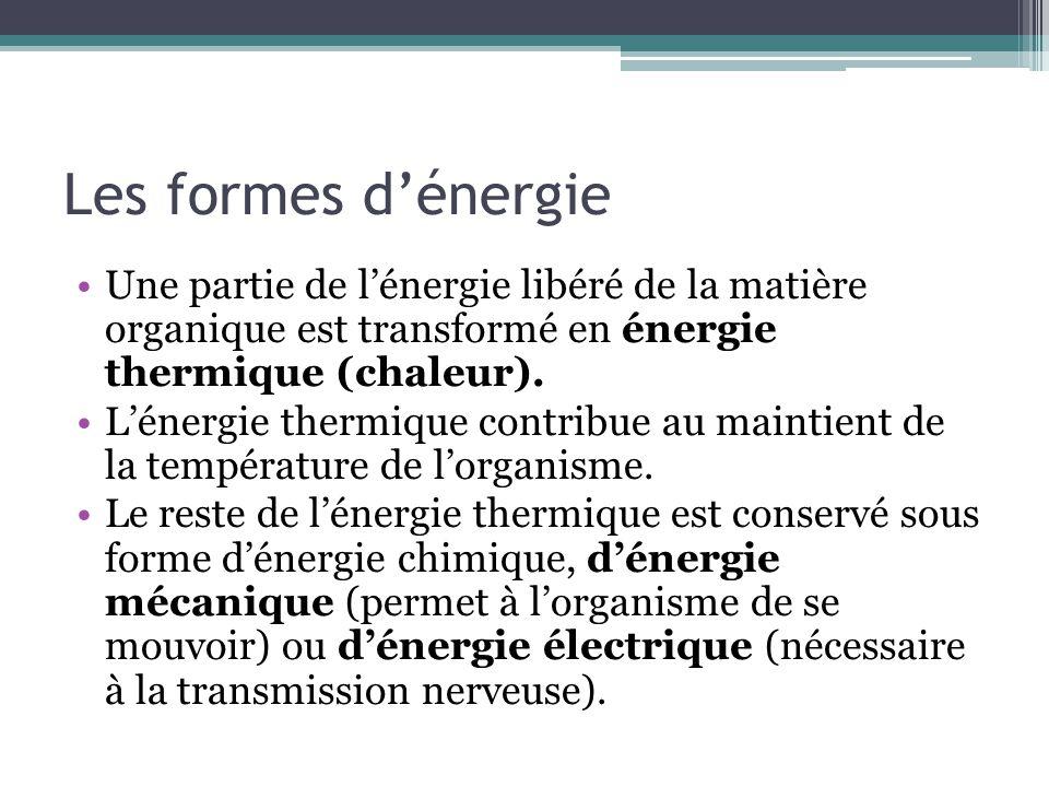 Les formes d'énergie Une partie de l'énergie libéré de la matière organique est transformé en énergie thermique (chaleur).