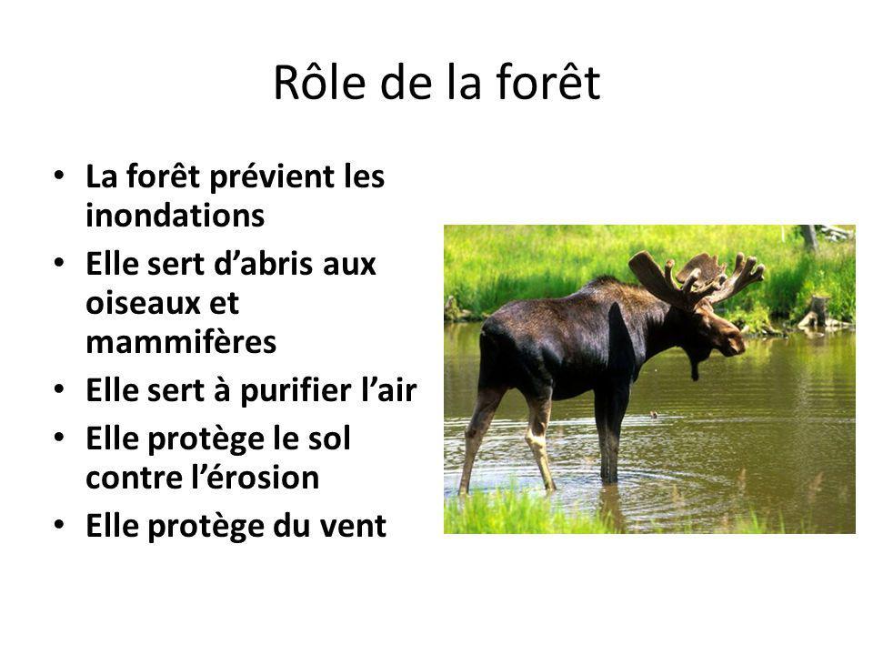 Rôle de la forêt La forêt prévient les inondations