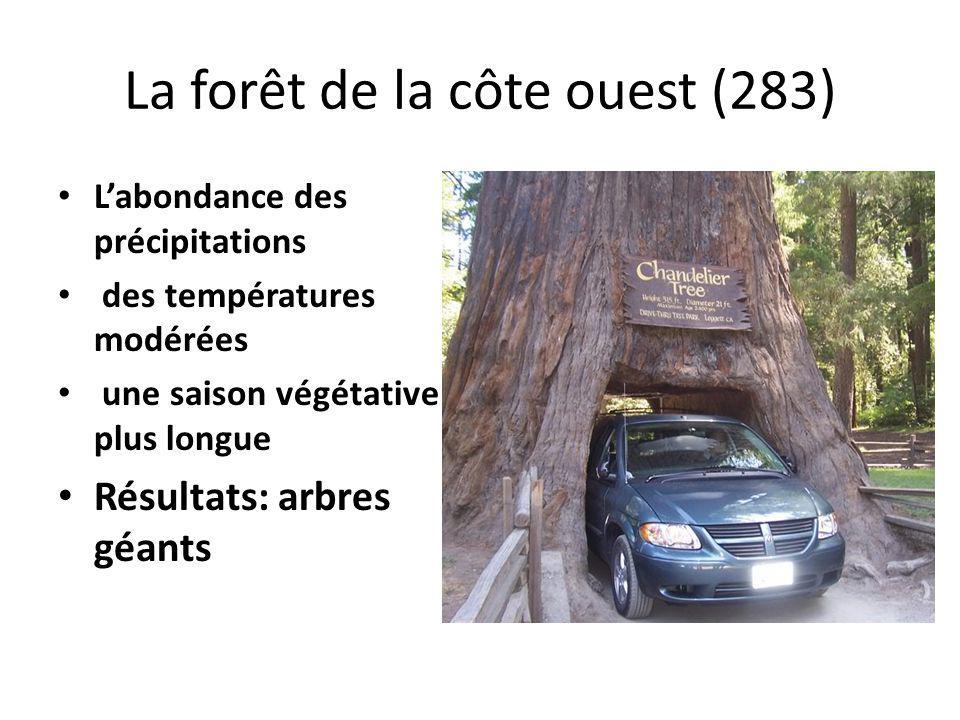 La forêt de la côte ouest (283)