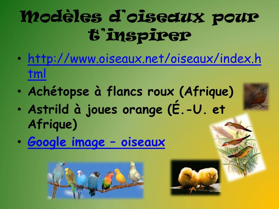 Modèles d'oiseaux pour t'inspirer