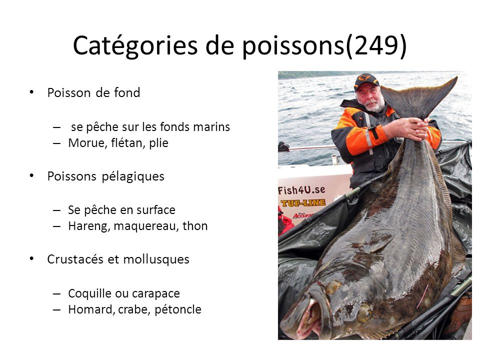 Catégories de poissons(249)